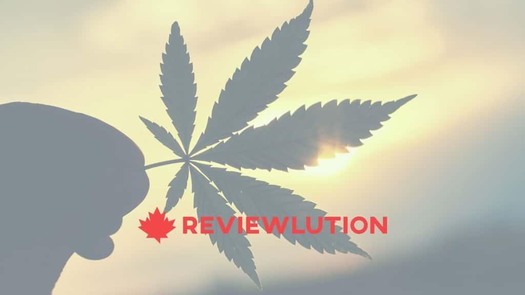 marijuana statistics canada