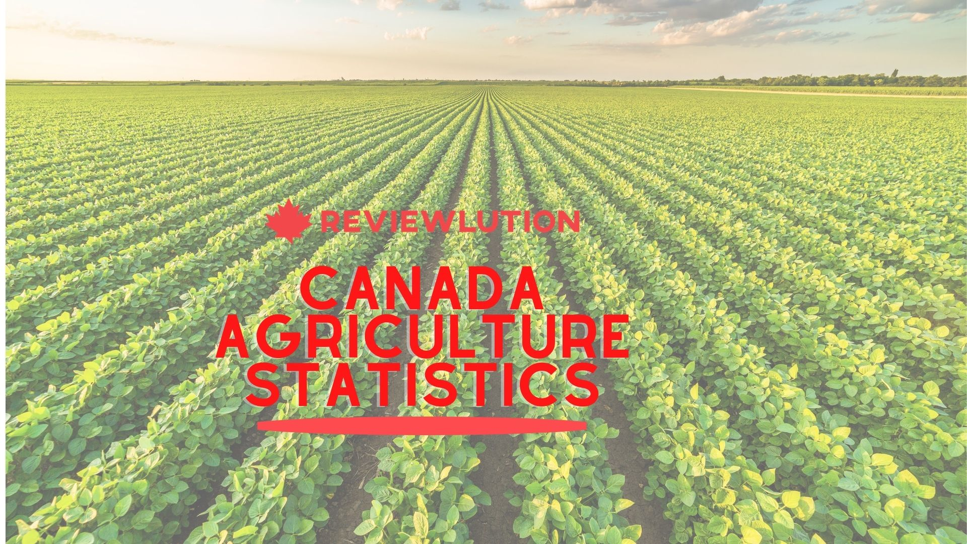 19+ Incredible Canada Agriculture Statistics [2021 Harvest]